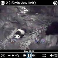 Kinoma Panda Cam